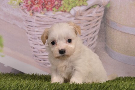 hondjes.nl pup